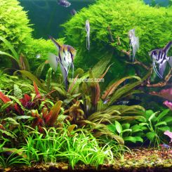 Aquarium Fish Plants Accessories Arizona Aquatic Gardens I first started building these before anyone else! arizona aquatic gardens