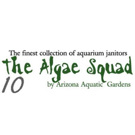 The Algae Squad10