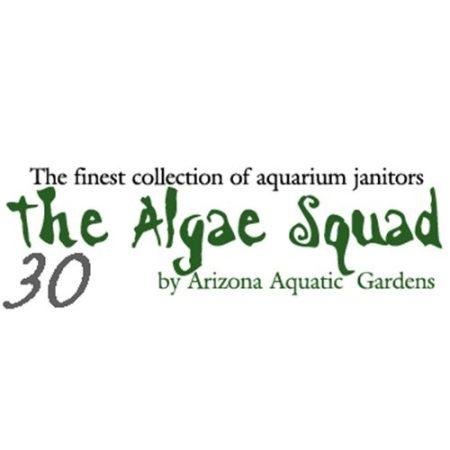 The Algae Squad30