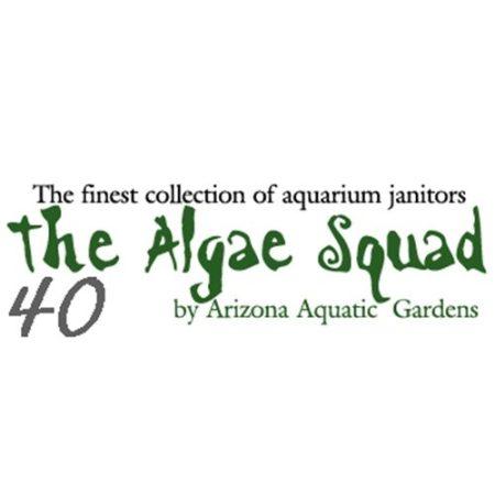 The Algae Squad40