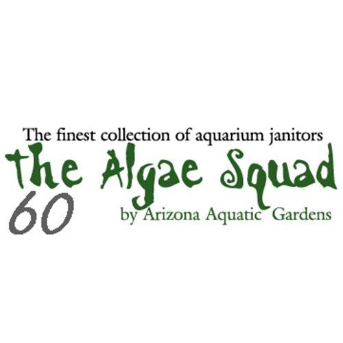 The Algae Squad60