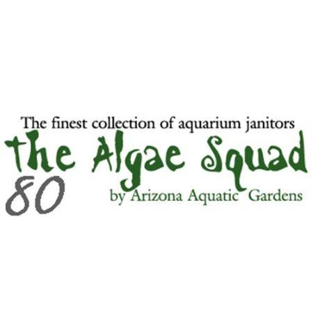 The Algae Squad80