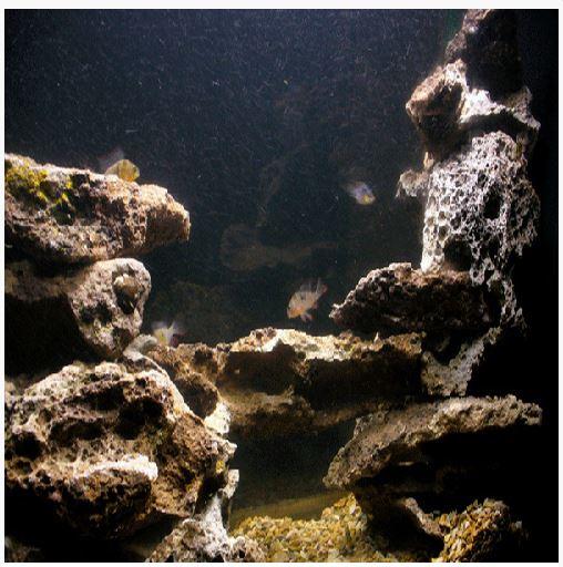 AAG Aquarium Lace Rock