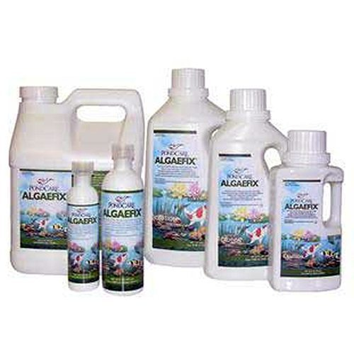 Algaefix Algae Prevention | Decorative Pond Safe