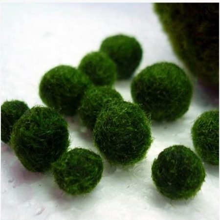Marimo Russian Underwater Mini Moss Ball
