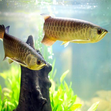 Miscellaneous Aquarium Fish