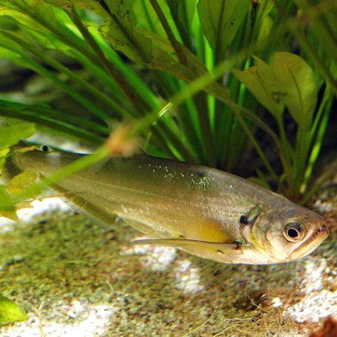 Fish choices for Larger Aquariums