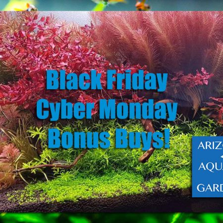 AzGardens.com Black Friday Cyber Monday Bonus Deals